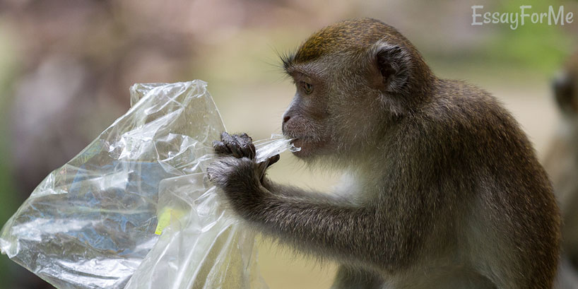 Monkey Eating Plastic Bag